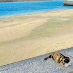 """<span class=""""title"""">. . . 奥武島の猫ちゃん😻 . 人懐こくてとっても可愛い☺️❤️ 天ぷらあげたくなっちゃうけど、 一丁前に好き嫌いされました…。笑 . . . _ _ _ #南城市 #奥武島 #車で行ける離島 #離島猫 #天ぷら #海 . #沖縄 #沖縄カフェ #カフェ  ..</span>"""