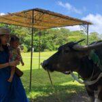 """<span class=""""title"""">★.:*:・.★.:*:・.★.:*:・.★.:*:・.★.:  牛年🐄🐮  ってことで牛と撮ってもらった去年の沖縄写真  牛と一緒にのんびり時間。  昨日の有吉のテレビ見てて やっぱり沖縄に行きたいって めっちゃ思った🌺  まだまだ知らない沖縄が沢山ある  竹富島、石垣 ..</span>"""