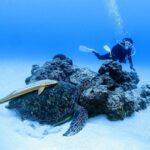 """<span class=""""title"""">𓂃𓂃𓂃𓊝𓄹𓄺𓂃𓂃𓂃  📍糸満  リピーターのナカちゃんと 糸満でファンダイビング🤿   本日も割と暖かく 透明度もGOOD✨   久しぶりの珊瑚と砂地ポイント 光も入ってすごく綺麗でしたよ😄   ウミガメも2匹会えて ..</span>"""
