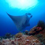 "<span class=""title"">夢中でシャッター切りまくった😍 貸切鹿ノ川✨ @blueseasoniriomote  #マンタ #mantaray #西表 #okinawagram #ダイビング #スキューバダイビング #diving #scubadiving #divingm ..</span>"