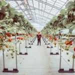 """<span class=""""title"""">We're munching our way through these cold January days. First stop strawberry picking in Nanjo, the largest strawberry farm in Okinawa 🍓 ..</span>"""