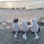 "<span class=""title"">#travelgram #旅 #旅行 #travel #trip #久高島散歩 #沖縄散歩 #沖縄グラム #okinawagram #okinawawalk #goforawalk #ピザ浜 #pizahama #beach #ムーミンパパ #mumin ..</span>"