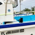 """<span class=""""title"""">I spy a cute kitty making her home in a boat at the marina!</span>"""
