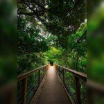 """<span class=""""title"""">🏝森の吊り橋🏝 ✩ ✩Here is the latest report from Okinawa. ✩ ✩ ✩比地大滝です。 ✩川沿いコースではなく、緑道コースを行くと、、 ✩突如、森の中からつり橋が出現します! ✩ ✩ココはモデルが欲しかった😭 ✩映えそーだよね! ..</span>"""