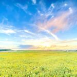 "<span class=""title"">* ひまわりが大好きだ🌻 * * #okinawa #miyakojima #miyakoisland #summer #happylife365 #okinawalife #okinawaphotoclub #okinawagram #sunflower #宮 ..</span>"