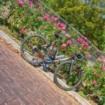 """<span class=""""title"""">. 播磨中央公園の薔薇🌹 秋の薔薇 11.3撮影  #播磨中央公園 #薔薇 #北播磨の色 #ロードバイク #自転車 #ロードバイクのある風景 #ロードバイク好きな人と繋がりたい #ロードバイク仲間募集 #写真好きな人と繋がりたい #自然 ..</span>"""