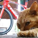 """<span class=""""title"""">おじいちゃんに見えない若さ😸 見習いたいと思います。  #猫 #キャット #ねこすきさんと繋がりたい #ねこのいる生活 #猫のいる暮らし #ねこすたぐらむ #茶トラ男子部 #ロードバイクのある風景 #ロードバイク初心者 #ロードバイク #ロードバイク男子 #ロードバイク ..</span>"""