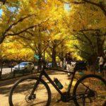 "<span class=""title"">綺麗でした神宮のイチョウ並木。懐かしいキャットストリート、ピンクドラゴン/クリームソーダ。 #bianchi #bianchibicycles #cycling #サイクリング #サイクリングおじさん #ビアンキ #ビアンキクロスバイク #bianchi ..</span>"