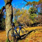 """<span class=""""title"""">朝活ライド復活です🚴♂️  梅の花が咲き始めましたね!  訳あって、実家にロードバイクを 置いてあるので、最近、なかなか、 早朝ライドが出来なくなりました が、  実家にいる時はと、  東名東京インター手前、世田谷 美術館がある""""砧公園""""迄往復し て .. #ロードバイクJP</span>"""