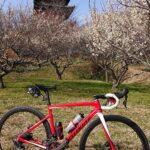 """<span class=""""title"""">2021.02.27  本日は休み。🚵💨 ソロライドです。いつもの 足守~中庄~総社へ 写真は 総社市 備中国分寺です。 もう満開です。そして 本日は 晴れ☀️ でも 東の風が吹いてましたが、ものすごく気持ちいいライドでした。 他にも 菜の花も撮りまし .. #ロードバイクJP</span>"""