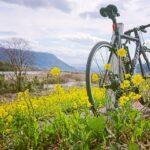 """<span class=""""title"""">. 菜の花に春の訪れを感じる。 イエローカラーは元気貰える 好きな色です😀 . あっという間に今日から3月ですね。 今月も頑張っていきましょう~🎶 . 📷2021.2.28のライドより🚴♂️🚴♂️ . . #因幡自転車道 #菜の花 #自転車  .. #ロードバイクJP</span>"""