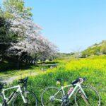 """<span class=""""title"""">先日のリハビリライド、、 自転車に乗ってみたら、意外に大丈夫だったので、花見川サイクリングロードの桜のトンネルを抜けて、大好きな花島公園の菜の花と桜を見に足を伸ばしました🌸🌼🌸🌼 ここは花島観音もあり、東屋の周りに桜が咲き、川沿いに菜の花が咲き、佇まい .. #ロードバイクJP</span>"""