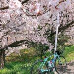 "<span class=""title"">春爛漫 🍀   生まれた季節が春ということもあり 春が一番好きな季節  ミモザにサクラにチューリップ 大好きな花たちが咲き誇る季節    夜勤明けの帰り道 今日はやけに太陽がまぶしい       :.。:.。:.。:.。:.。:.。:.。:.。:.。: .. #ロードバイクJP</span>"