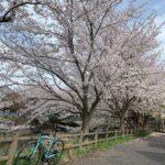 "<span class=""title"">午後から所用で外出 今年ニロちゃんと初🌸  #roadbike #roadbikelife #roadbike_jp #igcjp #be_cyclist #bicycles_daisuki #biciamore #bianchi #vianiron .. #ロードバイクJP</span>"