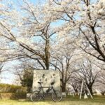 "<span class=""title"">朝の自転車時間 桜のトンネルからの🌸 自転車楽しいです。  Bicycles that make you aware of various things are fun😊  #小径車 #小径車のある風景 #自転車のある風景 #ミニベロのある風景 # .. #ロードバイクJP</span>"