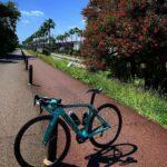 "<span class=""title"">デイゴとヤシと青空と…  Erythrina variegata flowers, palm trees and blue sky🌴  #サイクリング #ロードバイク #自転車のある風景 #自転車好きな人と繋がりたい #写真好きな人と .. #ロードバイクJP</span>"