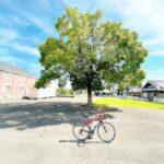 """<span class=""""title"""">この木なんの木気になる木 . . #この木何の木 #自転車 #pinarllo #ピナレロ #ロードバイク #サイクリング #ポタリング #igcjp #cyclography #cycling #cyclinglife #roadbike #roa .. #ロードバイクJP</span>"""