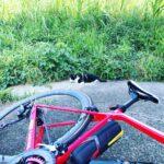 """<span class=""""title"""">今日のにゃんこ。  #今日のにゃんこ #猫 #ねこ #ネコ #cat #淀川 #淀川サイクリングロード #ロードバイク #ロードバイクのある風景 #ビチスタイル #ロードバイクJP #canyon #canyonendurac .. #ロードバイクJP</span>"""