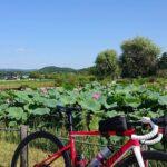 """<span class=""""title"""">2021.07.27🌞 本日は休み。 暑いので 朝早めのライド 足守のいつもの近水園へ その後は 備中高松城跡の池には 蓮の花が 高さも大きくなり見頃。 綺麗です。  🎶🎶🎶🎶🎶🎶🎶🎶🎶🎶🎶🎶🎶🎶🎶  おしまいm(__)m (^.^)(-.-)(__) .. #ロードバイクJP</span>"""
