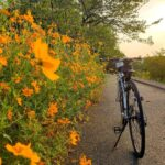"<span class=""title"">本日の早朝ポタリング🚴♂️ おはようございます😊 今朝は野鳥の楽園方面へ、キバナコスモスが綺麗に咲いていました😆❣️  #crossbike #crossbikes #crossbiker #giant #giantescaper3 #cyclin .. #ロードバイクJP</span>"